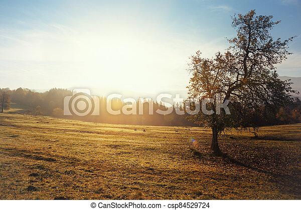 beautiful mountain landscape - csp84529724