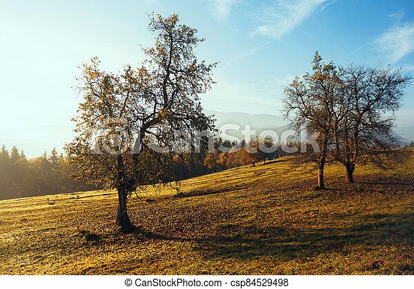beautiful mountain landscape - csp84529498