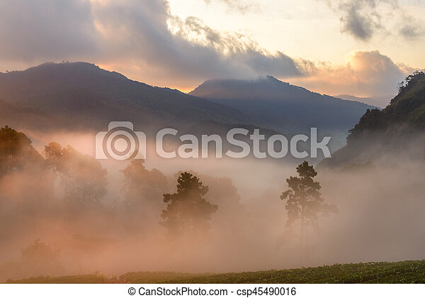 Beautiful Mountain with cloud and mist at dawn - csp45490016