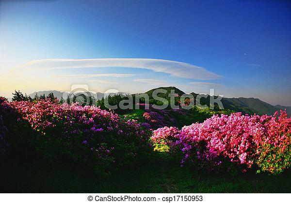 Beautiful mountains in south korea, baraebong, azaleas - csp17150953
