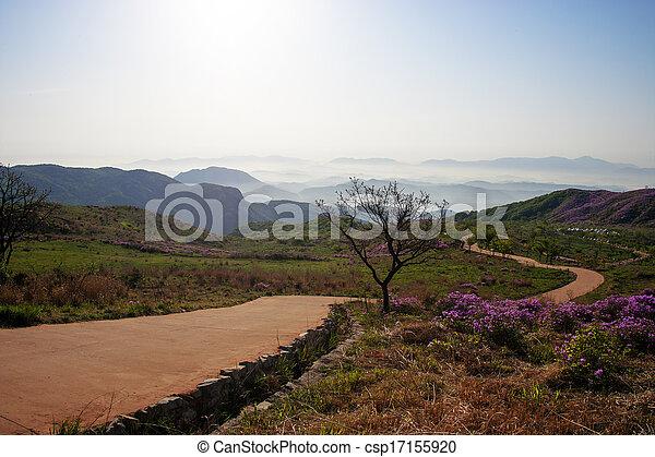 Beautiful mountains in south korea, hwangmaesan, Azaleas - csp17155920