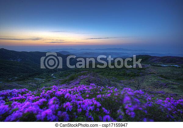 Beautiful mountains in south korea, hwangmaesan, Azaleas - csp17155947