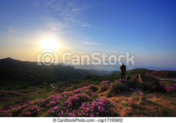 Beautiful mountains in south korea, hwangmaesan, Azaleas - csp17155902