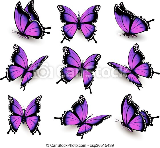 Beautiful of pink butterfly in different positions. Vector. - csp36515439