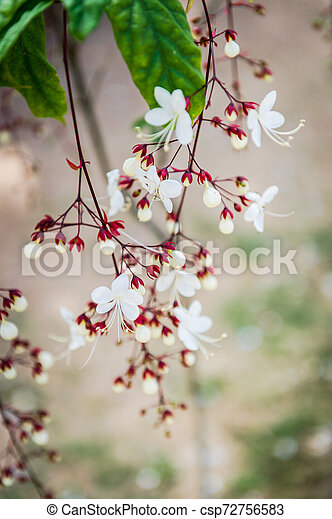 Beautiful of small white flower in the garden - csp72756583