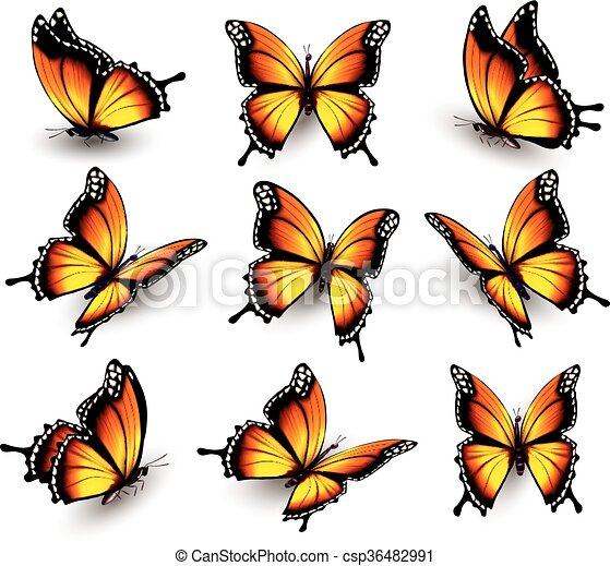 Beautiful orange butterfly in different positions. Vector. - csp36482991