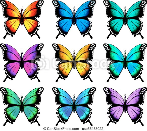 Beautiful orange butterfly in different positions. Vector. - csp36483022