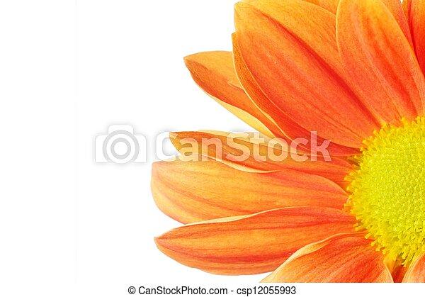 Beautiful orange flower isolated on white background - csp12055993