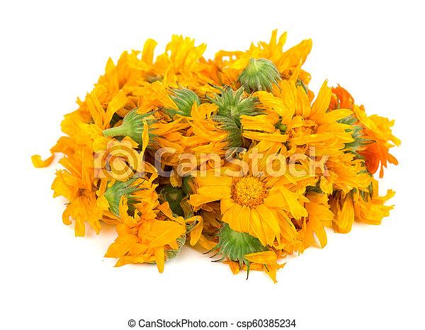 Beautiful orange lily flower isolated on white background - csp60385234