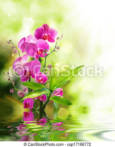 beautiful orchid and bamboo  - csp17166772