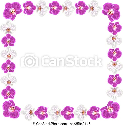 Beautiful orchid flowers frame isolated on white background for ...