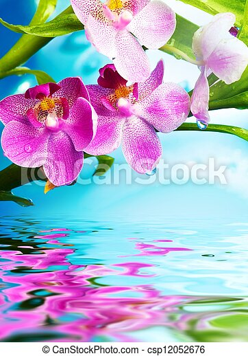 Beautiful orchid flowers reflected in water - csp12052676