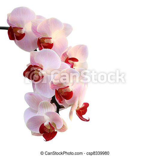 Beautiful orchid  - csp8339980