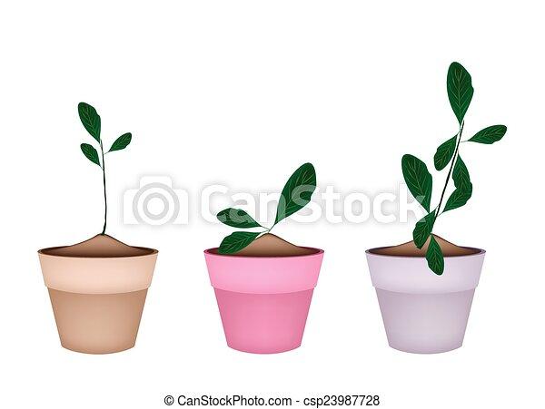 beautiful ornamental plants in ceramic flower pots csp23987728
