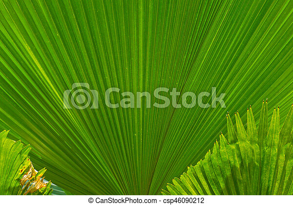beautiful palm leaves of tree in sunlight - csp46090212