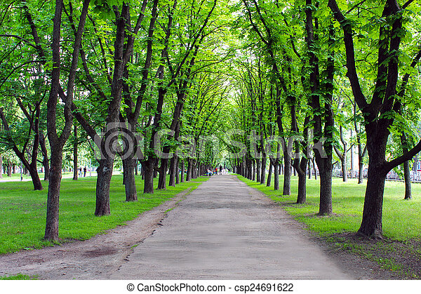 Beautiful park with many green trees - csp24691622