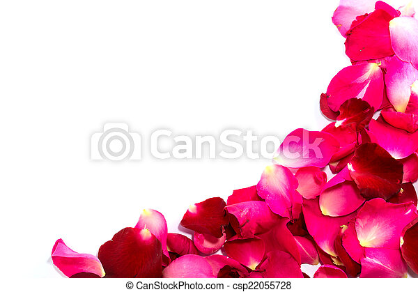 Beautiful petals of red roses - csp22055728