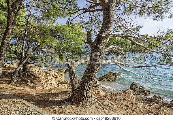 Beautiful pine trees and the shore of the blue sea in the evening. Croatia. - csp49288610
