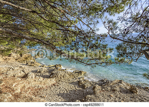 Beautiful pine trees and the shore of the blue sea in the evening. Croatia. - csp49288611