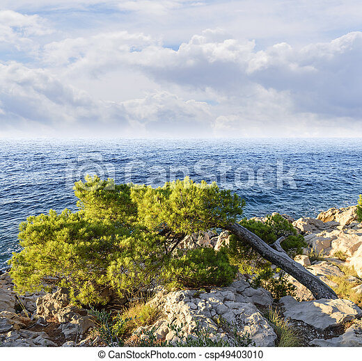 Beautiful pine trees and the shore of the blue sea in the evening. Croatia. - csp49403010