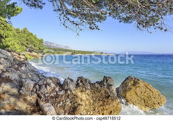 Beautiful pine trees and the shore of the blue sea in the evening. Croatia. - csp49718512