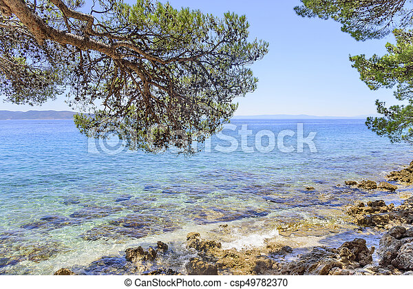 Beautiful pine trees and the shore of the blue sea in the evening. Croatia. - csp49782370