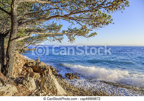 Beautiful pine trees and the shore of the blue sea in the evening. Croatia. - csp49969872