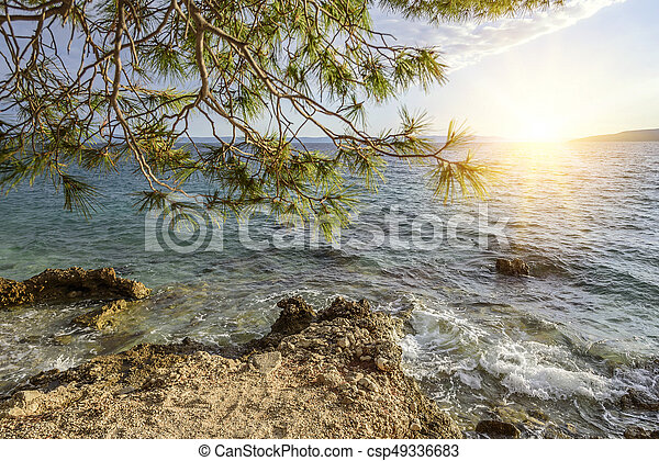 Beautiful pine trees and the shore of the blue sea in the evening. Croatia. - csp49336683