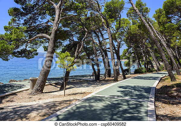 Beautiful pine trees and the shore of the blue sea in the evening. Croatia. - csp60409582