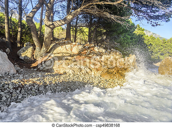Beautiful pine trees and the shore of the blue sea in the evening. Croatia. - csp49838168