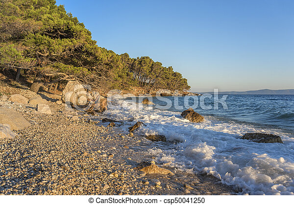 Beautiful pine trees and the shore of the blue sea in the evening. Croatia. - csp50041250