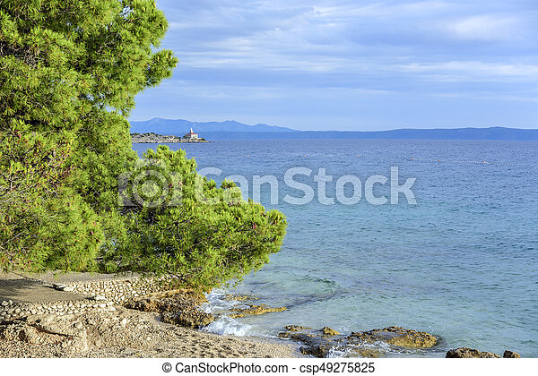 Beautiful pine trees and the shore of the blue sea in the evening. Croatia. - csp49275825