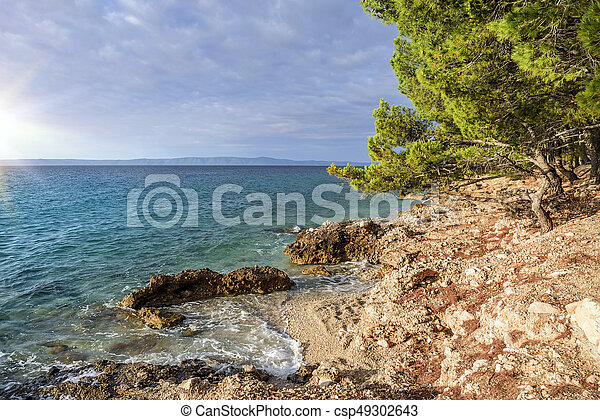 Beautiful pine trees and the shore of the blue sea in the evening. Croatia. - csp49302643