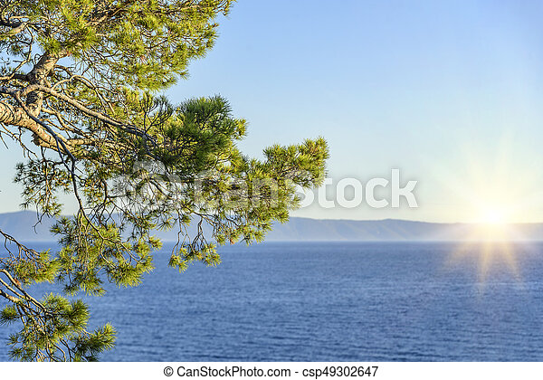 Beautiful pine trees and the shore of the blue sea in the evening. Croatia. - csp49302647