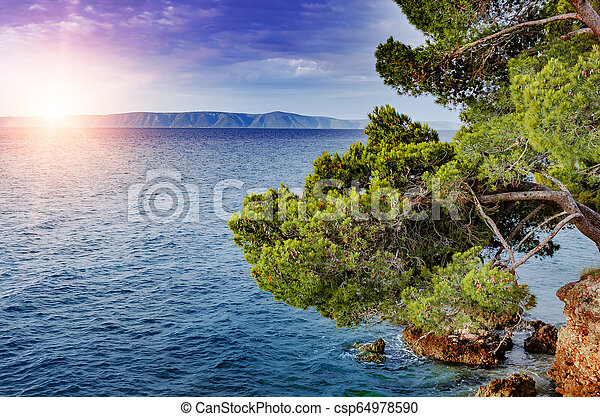 Beautiful pine trees and the shore of the blue sea in the evening. Croatia. - csp64978590