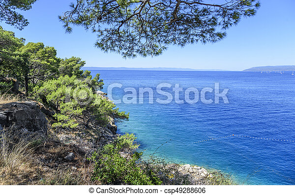 Beautiful pine trees and the shore of the blue sea in the evening. Croatia. - csp49288606
