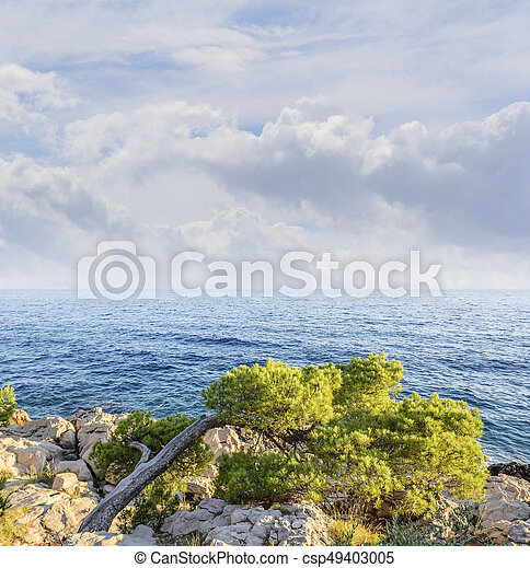 Beautiful pine trees and the shore of the blue sea in the evening. Croatia. - csp49403005