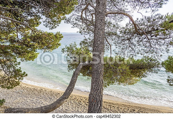 Beautiful pine trees and the shore of the blue sea in the evening. Croatia. - csp49452302