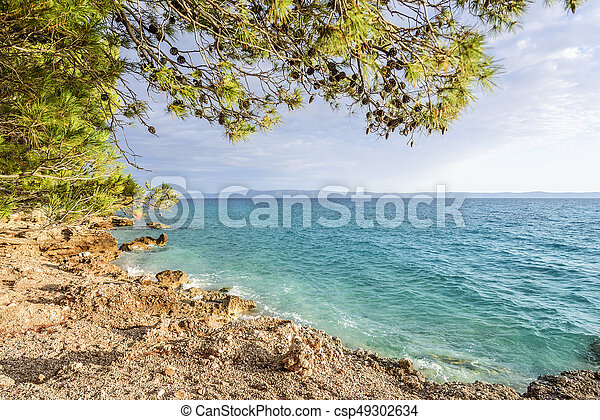 Beautiful pine trees and the shore of the blue sea in the evening. Croatia. - csp49302634