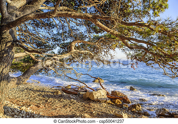 Beautiful pine trees and the shore of the blue sea in the evening. Croatia. - csp50041237