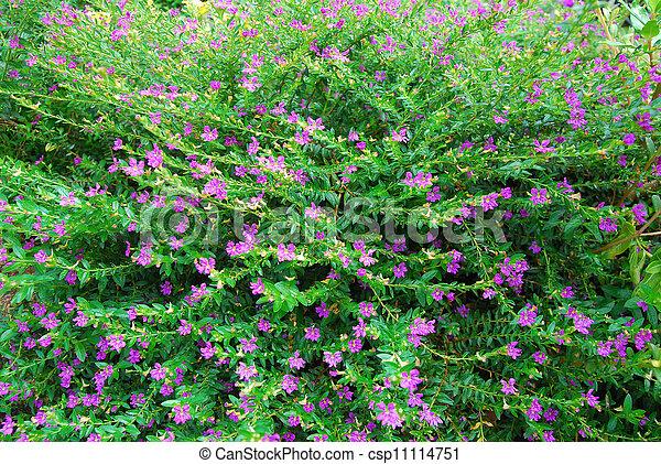 Beautiful pink flowers in garden - csp11114751