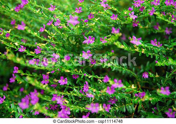Beautiful pink flowers in garden - csp11114748
