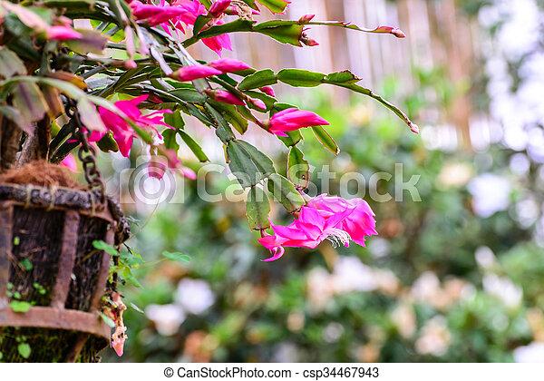 Beautiful pink flowers in garden. - csp34467943