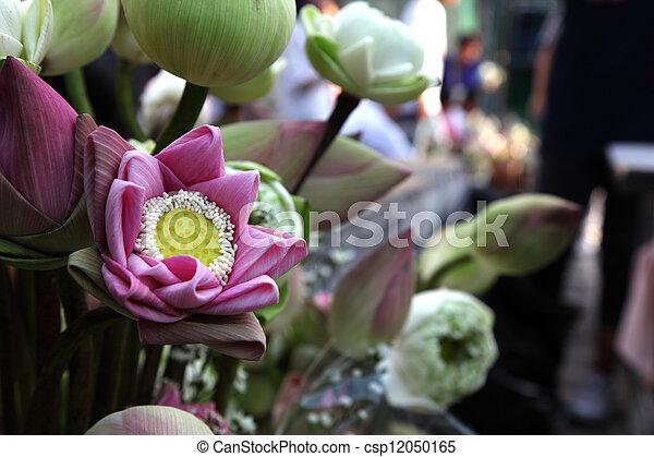 Beautiful pink lotus bud in market - csp12050165