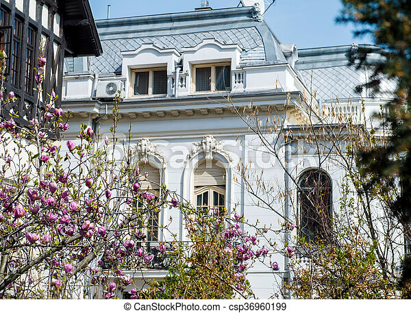 Beautiful Pink Magnolia In Bloom In Front Of Luxury House Old