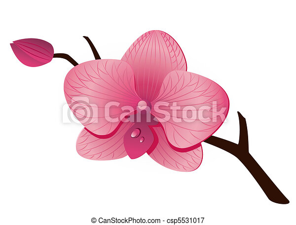 Beautiful pink Orchid - csp5531017