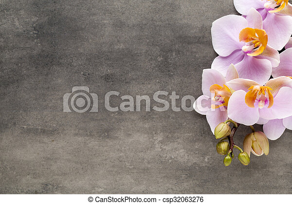 Beautiful pink orchid on a gray background. - csp32063276