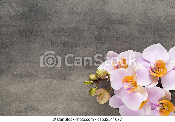 Beautiful pink orchid on a gray background. - csp32511677