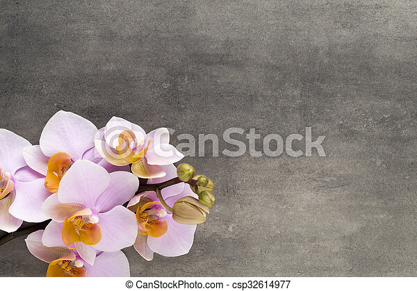 Beautiful pink orchid on a gray background. - csp32614977