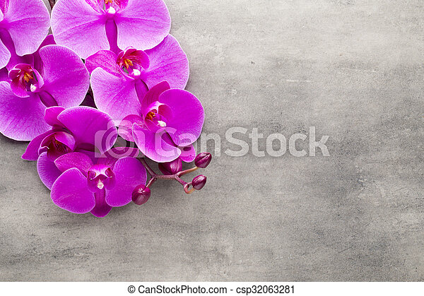 Beautiful pink orchid on a gray background. - csp32063281